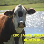Santa Adelaide 38 - 281938