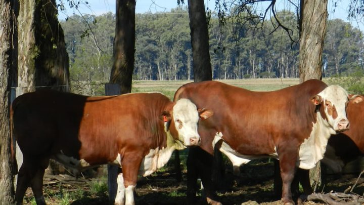 ASP divulga catálogo de touros a venda na ExpoAlegrete 2013