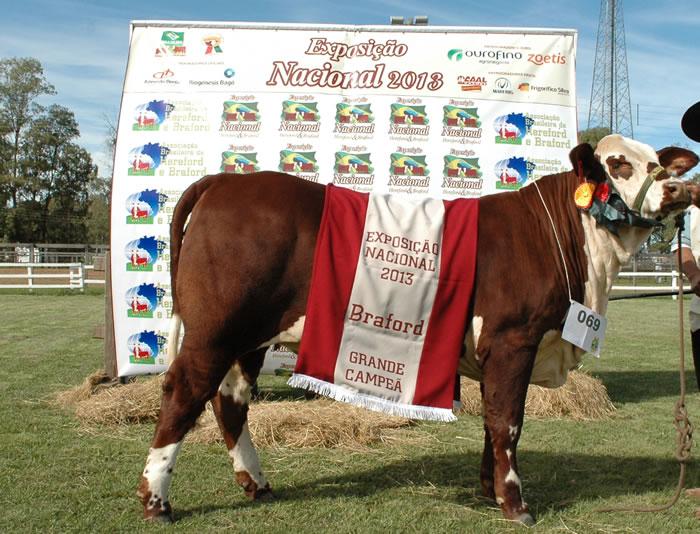 Grande Campeã Nacional da raça Braford é da ASP