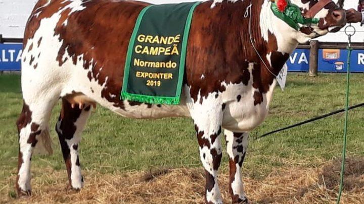 Normanda ASP é a Grande Campeã da Expointer 2019