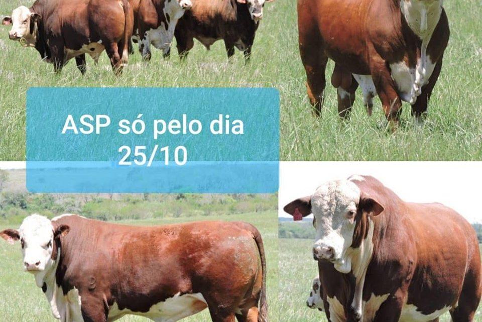 Estrelas da São Pedro quase prontas para o Remate Conexão Pampa