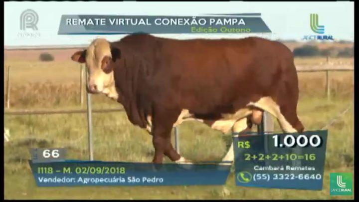 Com médias expressivas, Remate Virtual Conexão Pampa edição de outono abre agenda de leilões oficializados pela ABHB